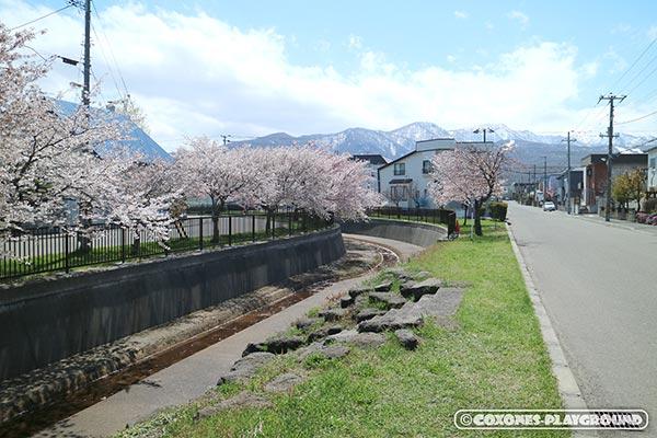 旧軽川緑地沿道