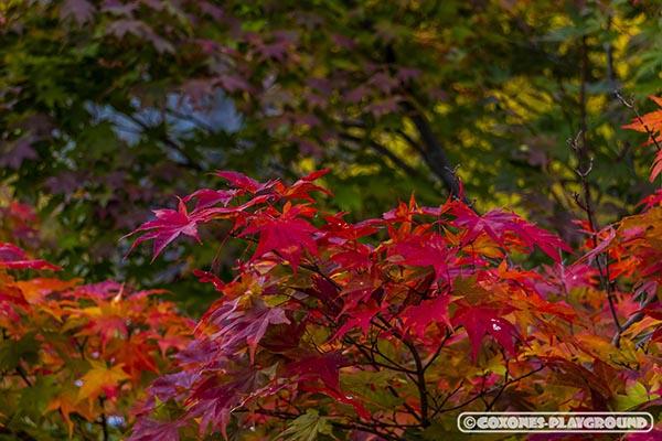 真っ赤に染まる紅葉