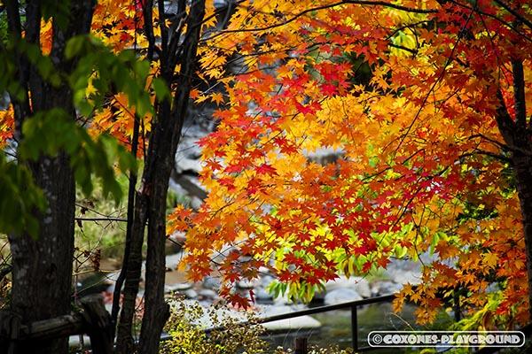 定山源泉公園の紅葉