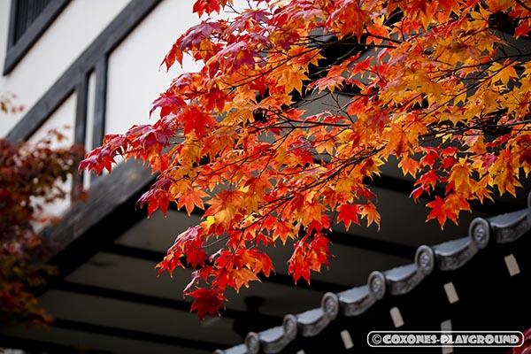 旅館の瓦屋根と紅葉