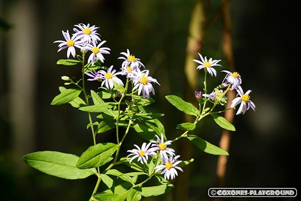 旭山記念公園の敷地内に咲いていた花