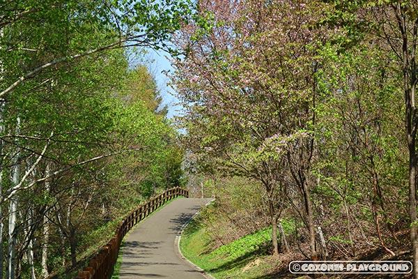 桜色がほのかに混じる遊歩道