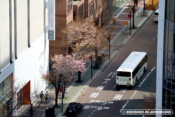 展望回廊から見下ろす桜の木