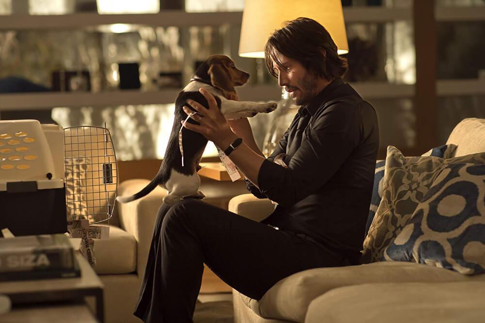 亡き妻からのプレゼントの子犬とジョン・ウィック